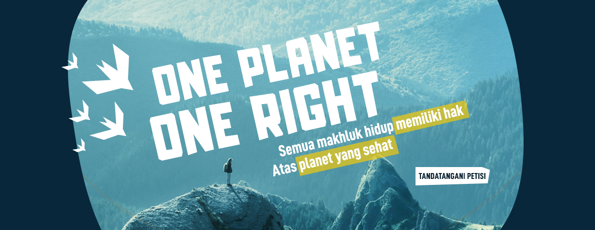 Birdlife International One Planet One Right Campaign – Petition website covers plover